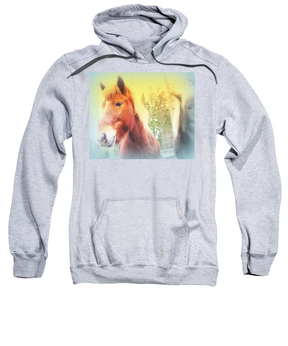 Horse Sweatshirt featuring the photograph We Have No Worries And Nothing Else Either by Hilde Widerberg