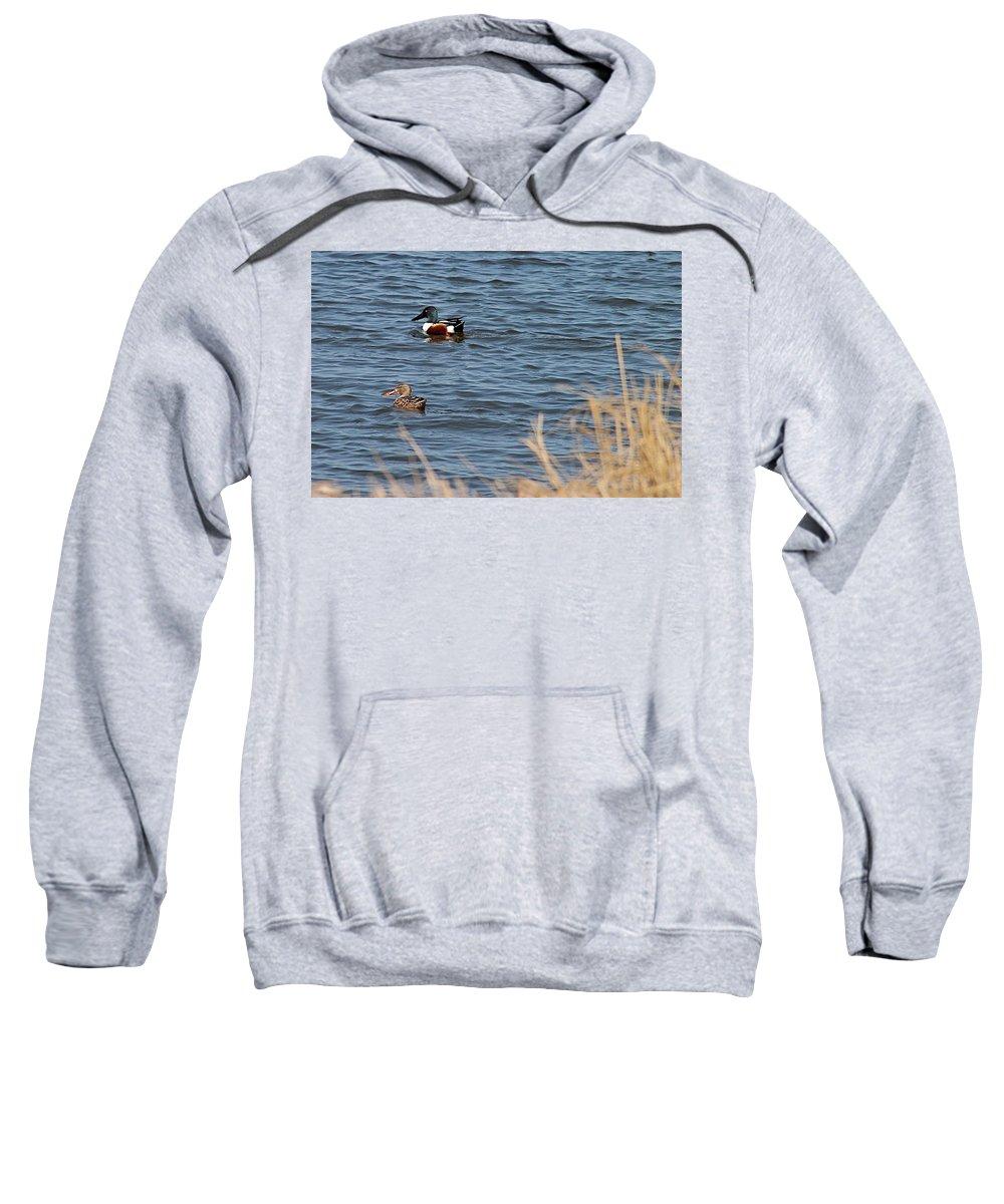 Birds Sweatshirt featuring the photograph Northern Shoveler Pair by Wayne Williams