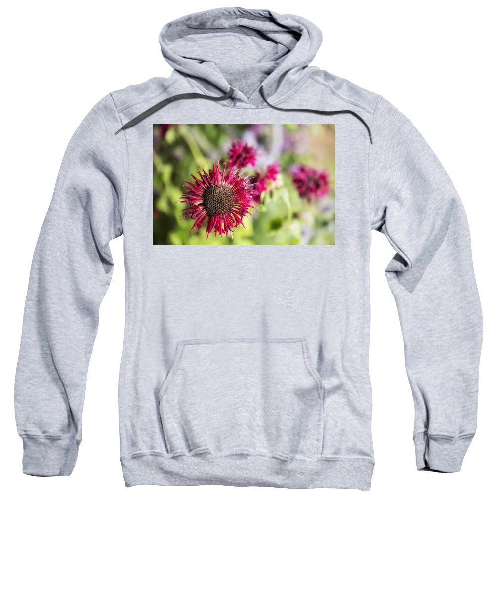 Blossom Sweatshirt featuring the photograph Not Yet Faded by Belinda Greb