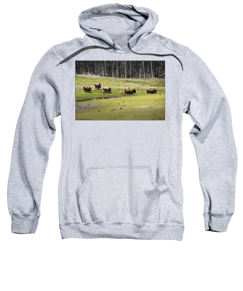 Buffalo Sweatshirt featuring the photograph Oh Give Me A Home Where The Buffalo Roam by LeeAnn McLaneGoetz McLaneGoetzStudioLLCcom