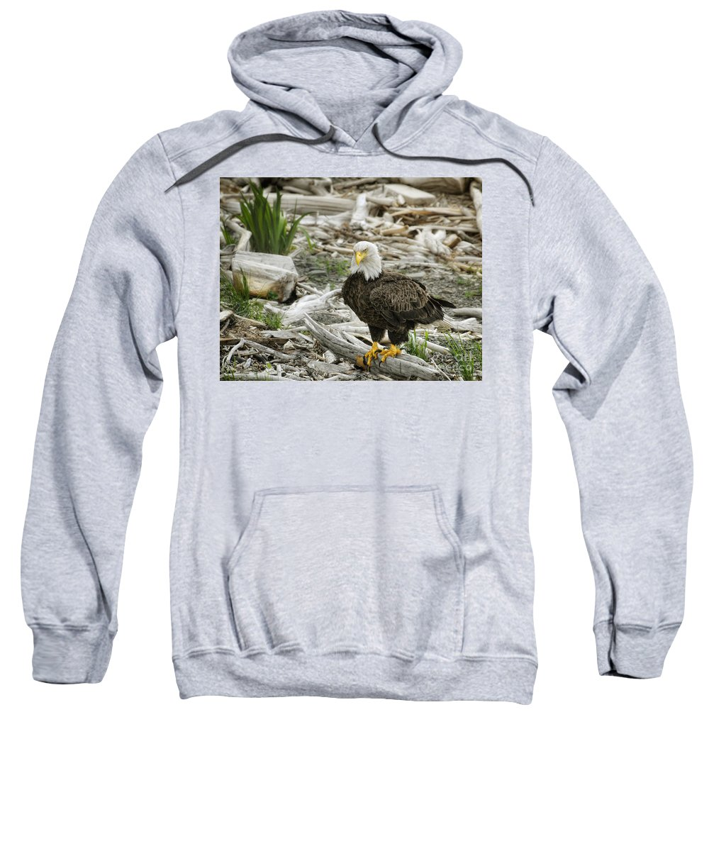 Birds Sweatshirt featuring the photograph Oh Really by Claudia Kuhn