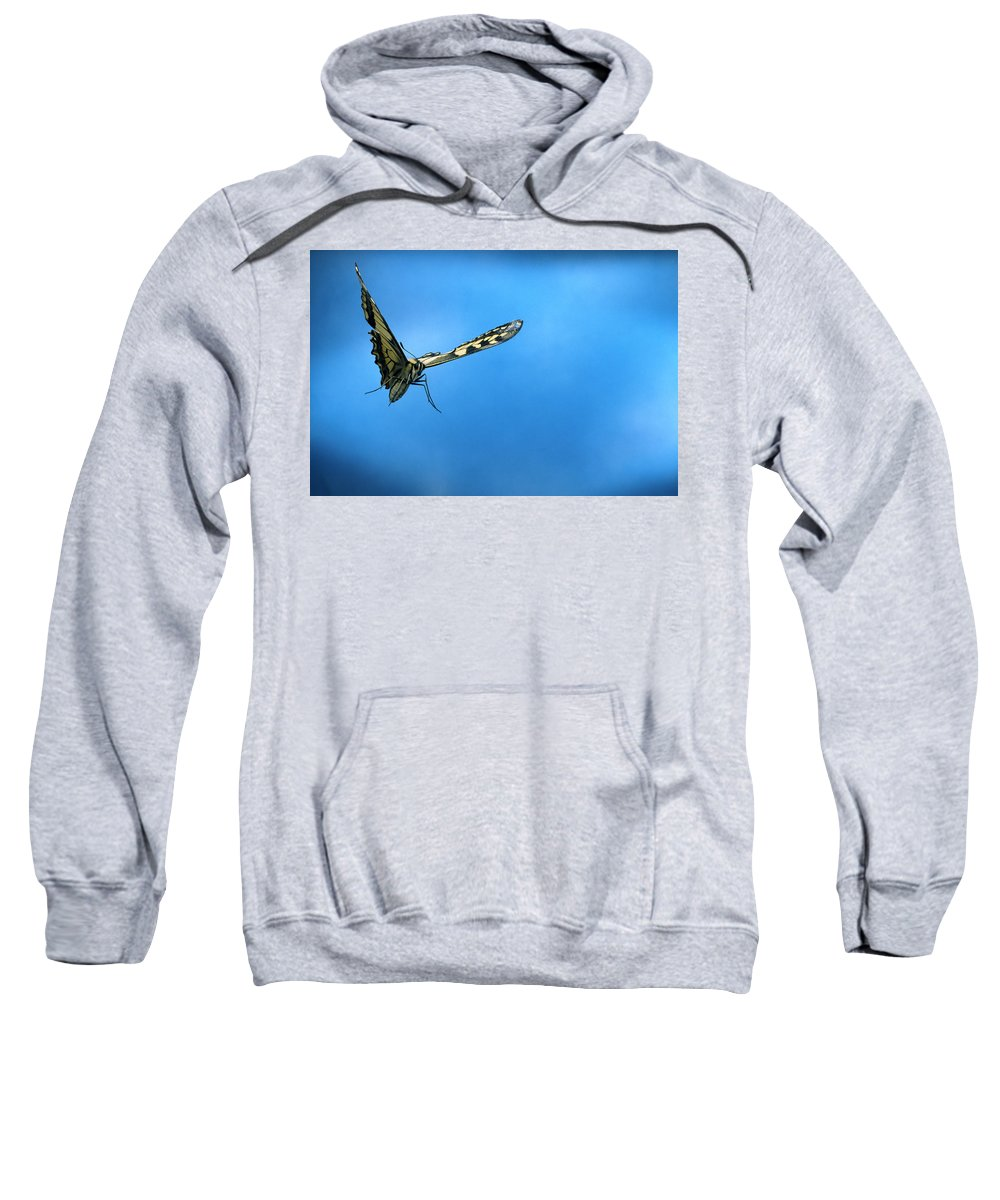 Nis Sweatshirt featuring the photograph Oldworld Swallowtail Papilio Machaon by Rene Krekels