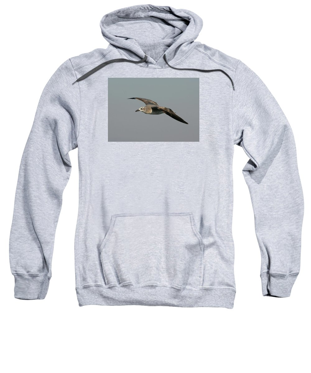 Gull Sweatshirt featuring the photograph On The Way by Christiane Schulze Art And Photography