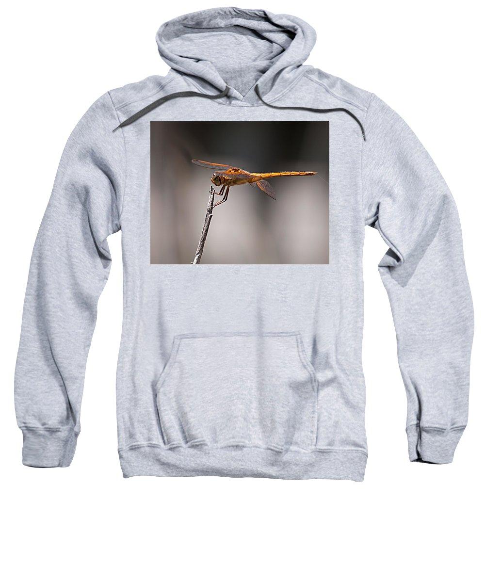 Orange Sweatshirt featuring the photograph Orange Dragonfly by Photos By Cassandra
