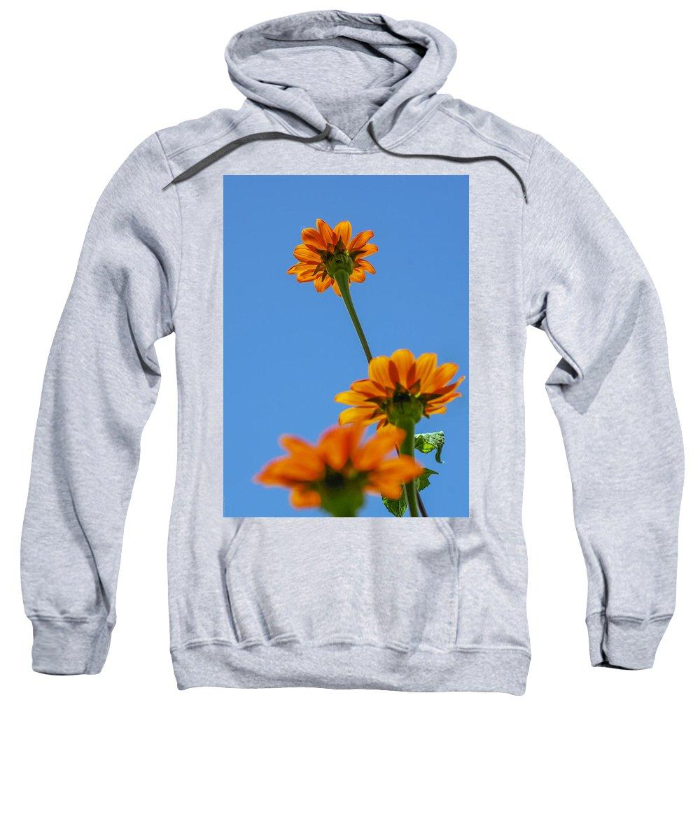 Orange Flowers Sweatshirt featuring the photograph Orange Flowers On Blue Sky by Debbie Karnes