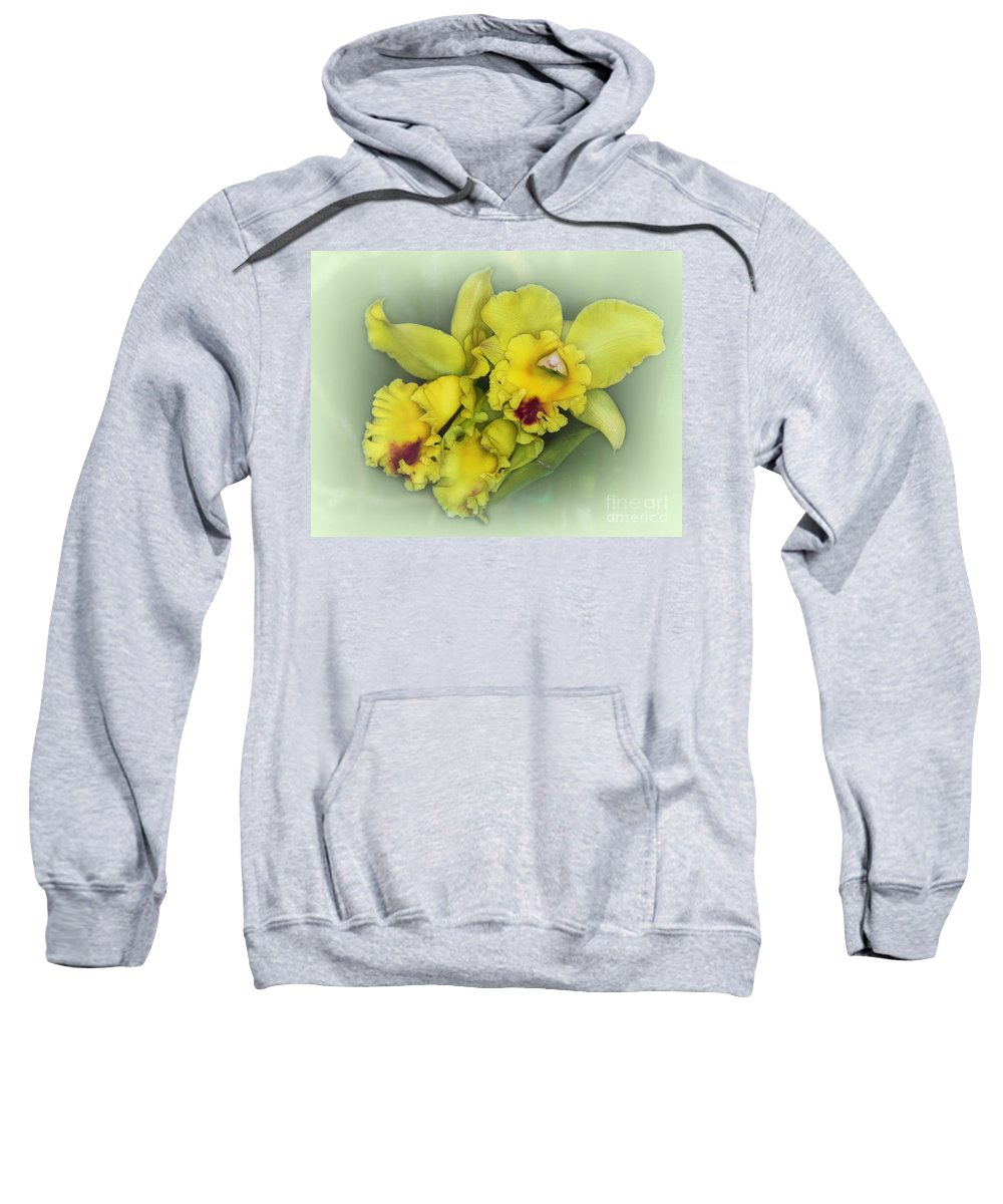Yellow Sweatshirt featuring the photograph Orchid Trio by Judi Bagwell