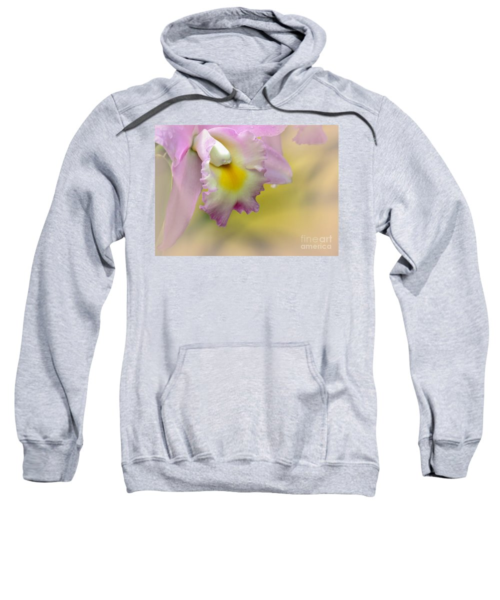 Macro Sweatshirt featuring the photograph Orchid Whisper by Sabrina L Ryan
