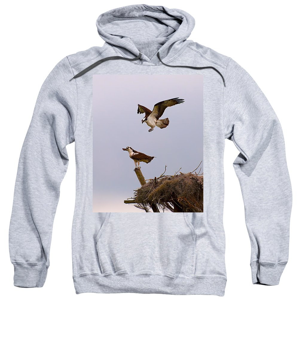 Osprey Sweatshirt featuring the photograph Osprey Coming In by Photos By Cassandra