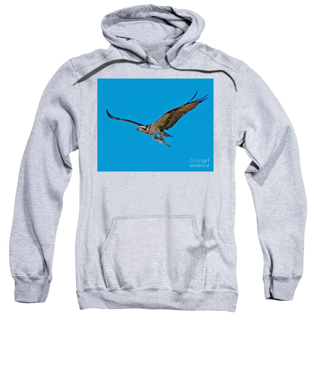 Osprey Sweatshirt featuring the photograph Dinner To Go by Stephen Whalen
