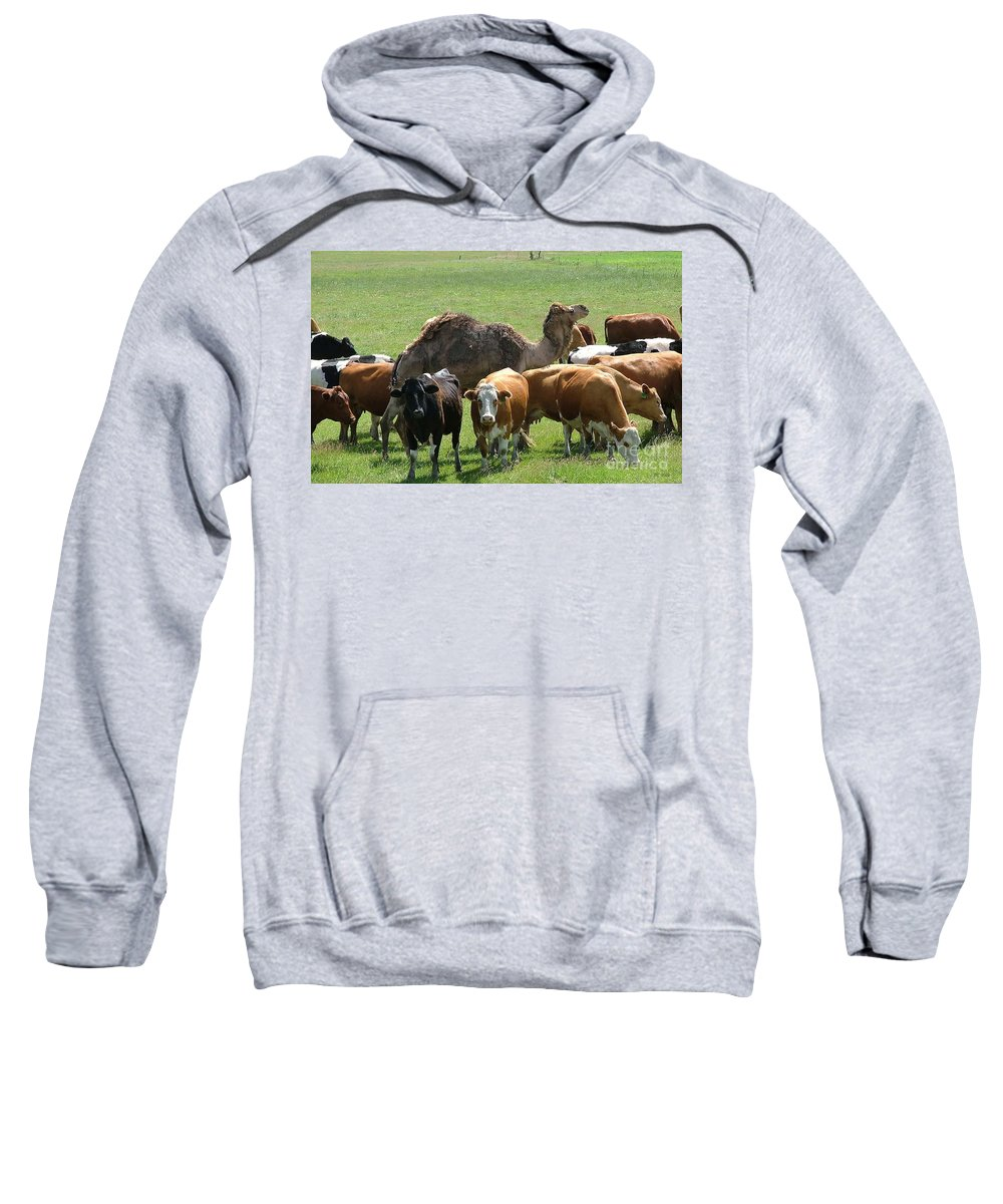 Camel Sweatshirt featuring the photograph Out Of Place by M Dale