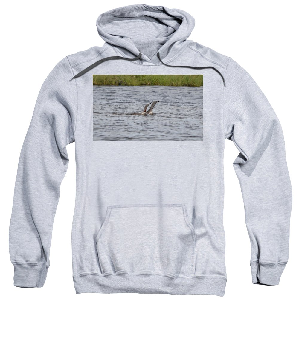 Red-throated Loon Sweatshirt featuring the photograph Pair Bonding by James Petersen