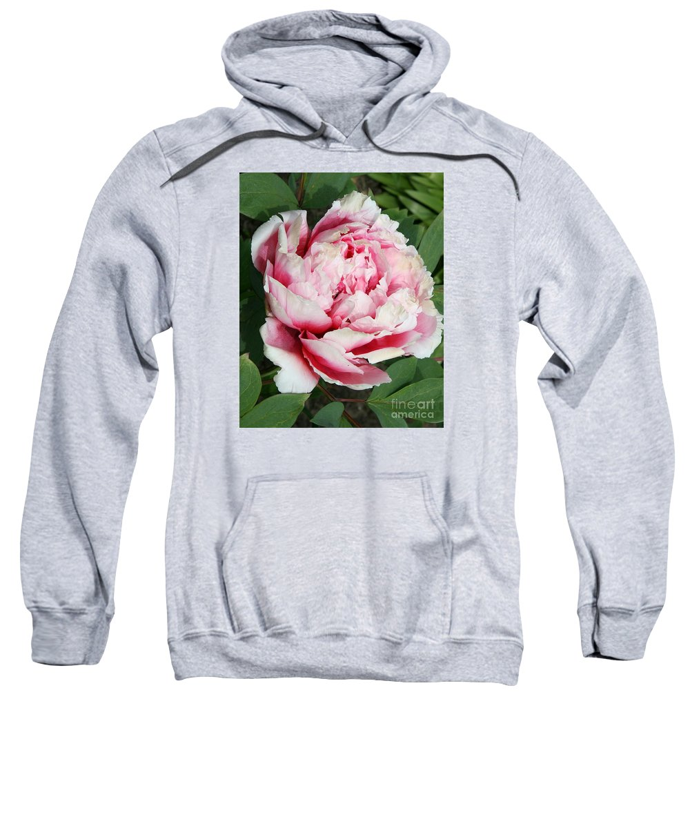 Peony Sweatshirt featuring the photograph Pale And Dark Pink Peony by Christiane Schulze Art And Photography