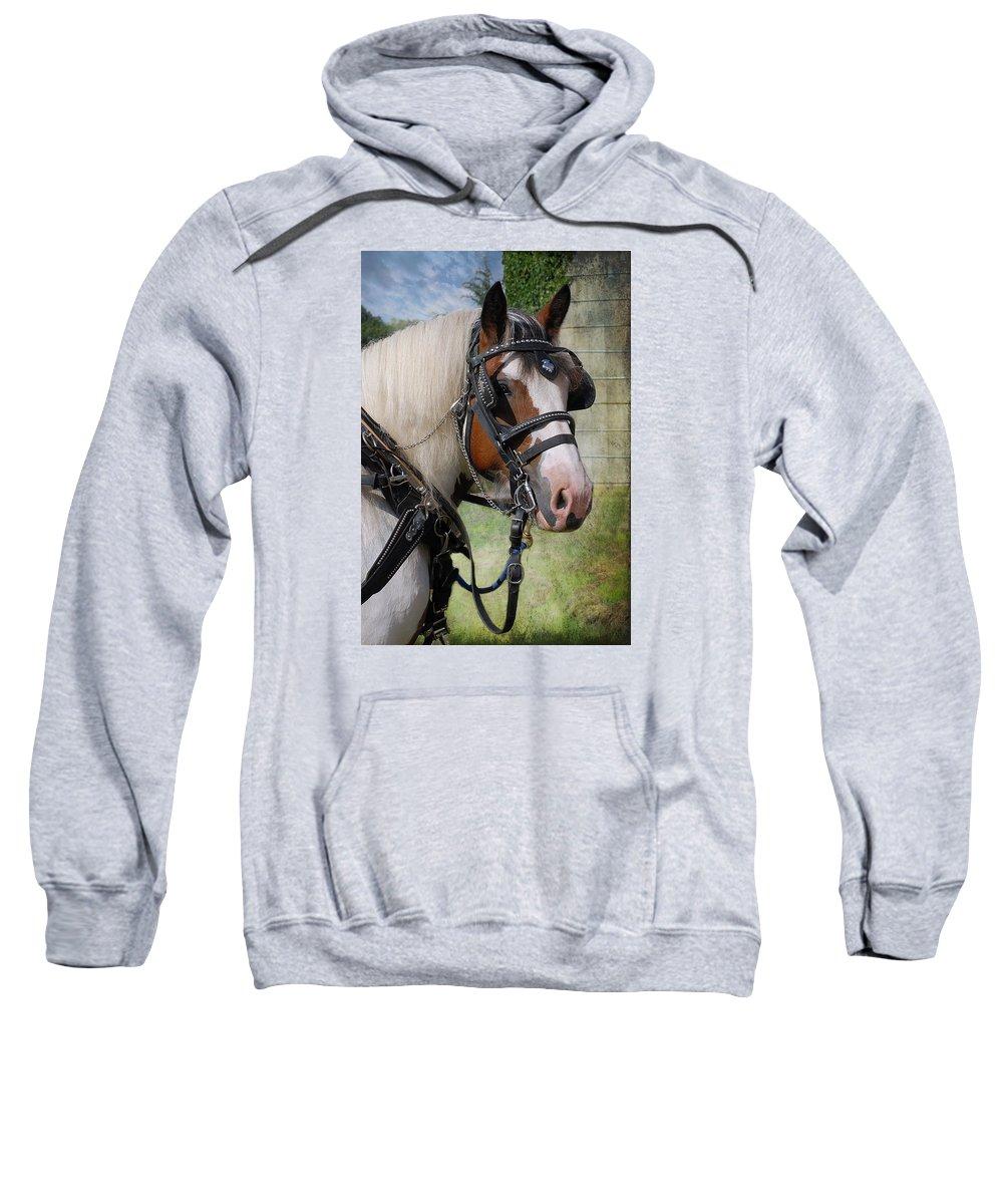 Heavy Harness Sweatshirt featuring the photograph Pandora In Harness by Fran J Scott