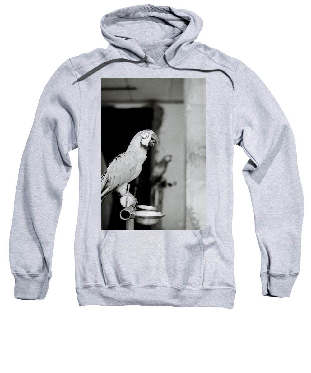 Parrot Sweatshirt featuring the photograph Parrot by Shaun Higson