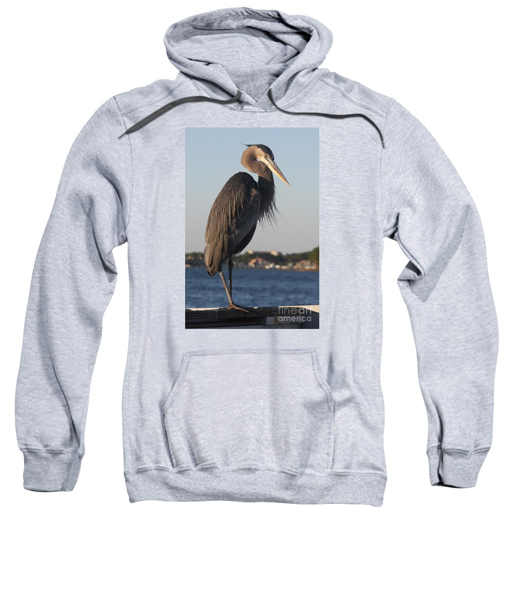 Heron Sweatshirt featuring the photograph Peer - Great Blue Heron by Christiane Schulze Art And Photography