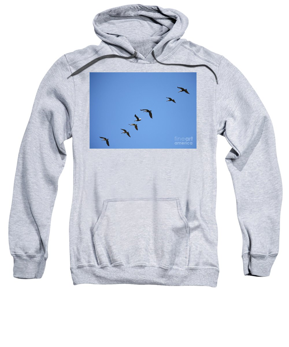 Pelicans Sweatshirt featuring the photograph Pelicans All In A Row by Carol Groenen