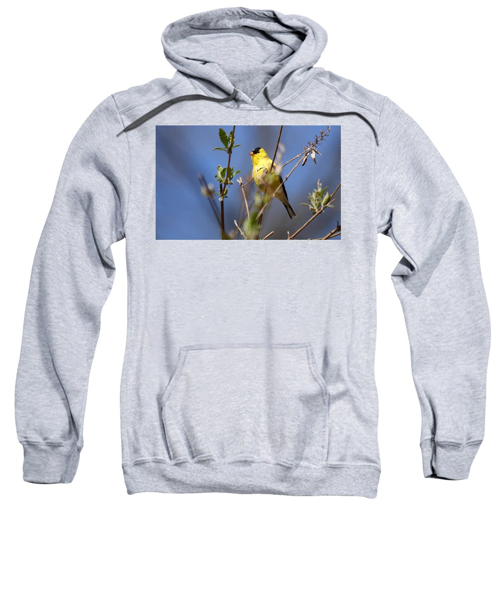 Goldfinch Sweatshirt featuring the photograph Perfect Shade Of Yellow by Lori Tambakis
