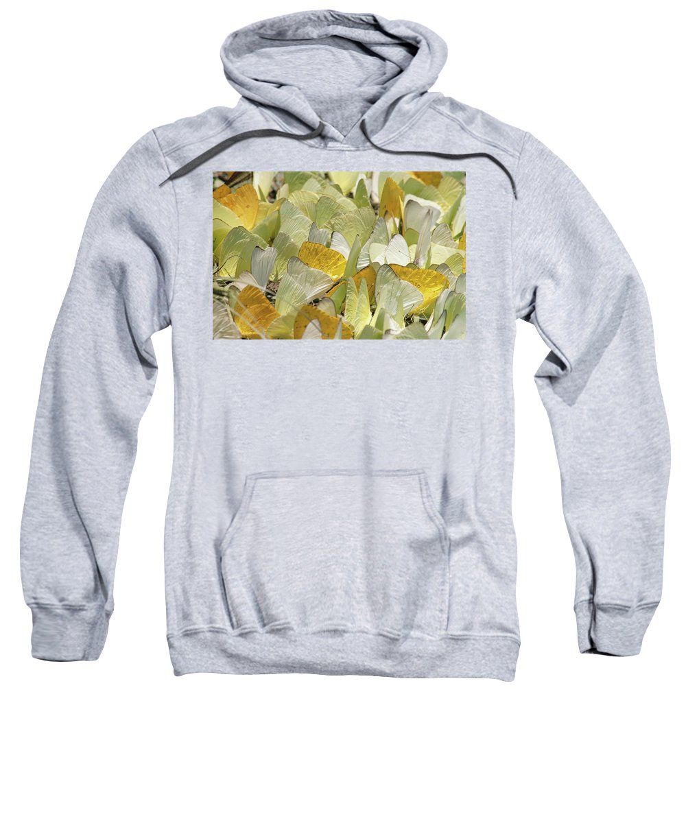 Color Image Sweatshirt featuring the photograph Pierid Butterfly Pieridae Puddling by Michael and Patricia Fogden