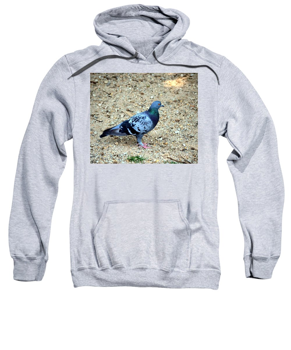 Pigeon Sweatshirt featuring the photograph Pigeon Toed by Maria Urso