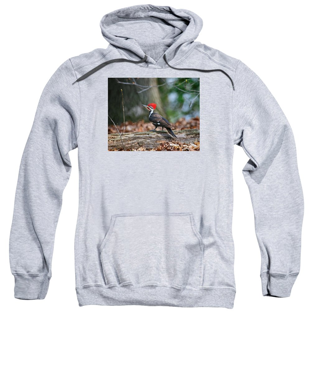 Pileated Sweatshirt featuring the photograph Pileated Woodpecker On Log by Timothy Flanigan