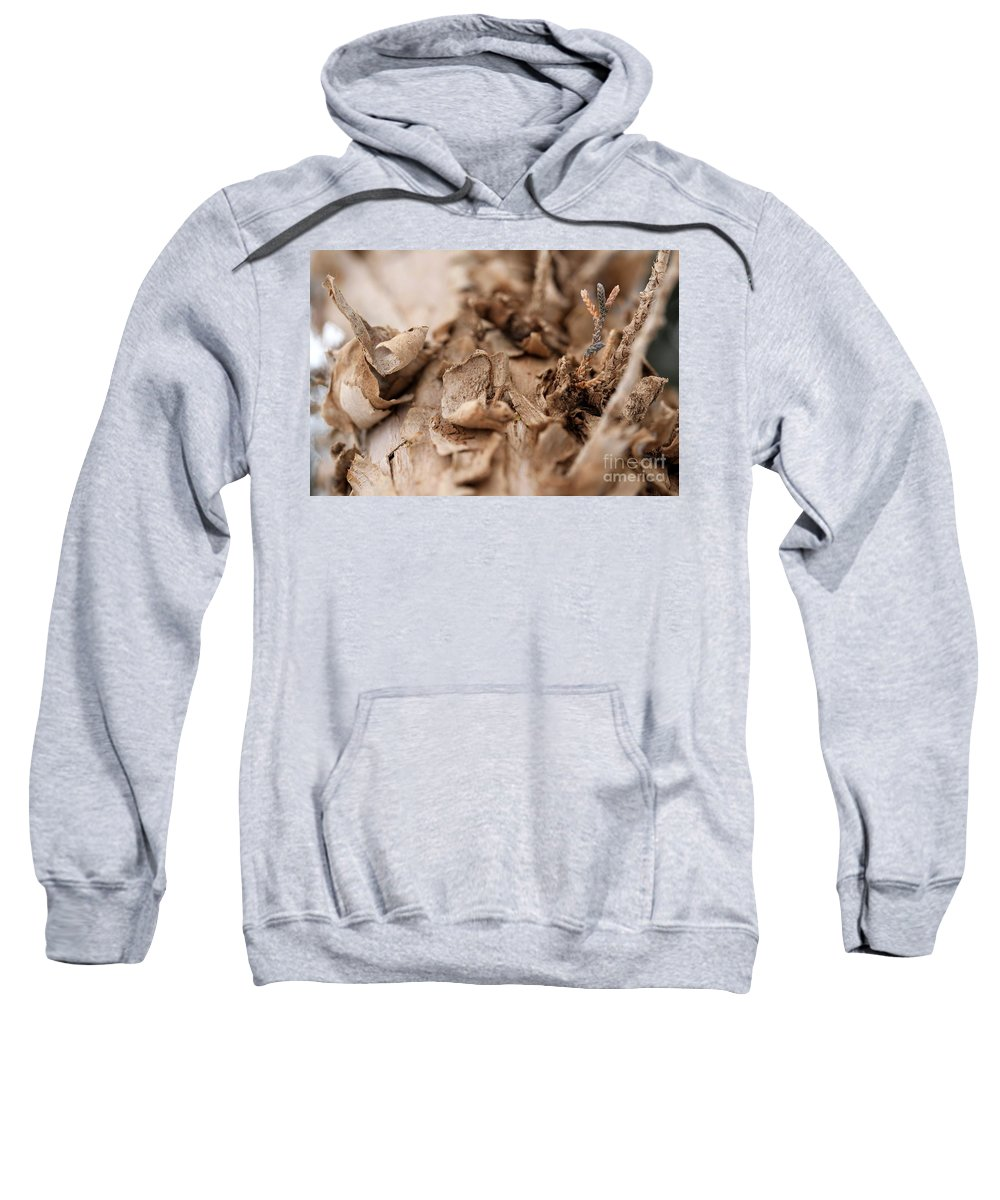 Macro Sweatshirt featuring the photograph Pine Sprig by Ashley M Conger