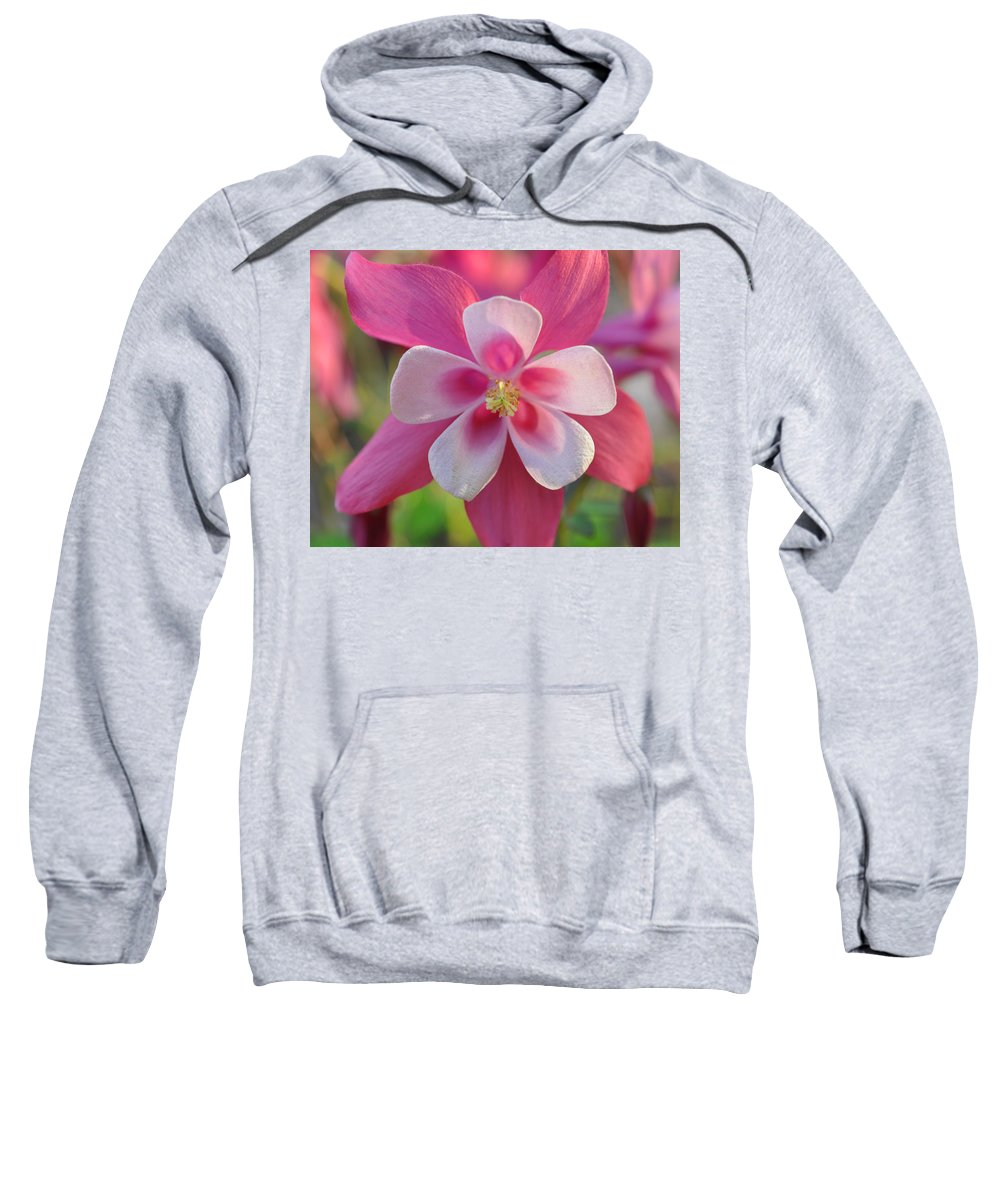 Spring Sweatshirt featuring the photograph Pink Columbine by Brittany Horton