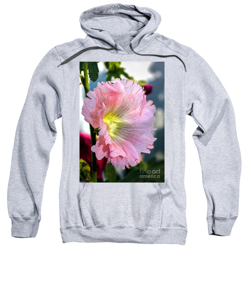 Mallow Family Hooded Sweatshirts T-Shirts