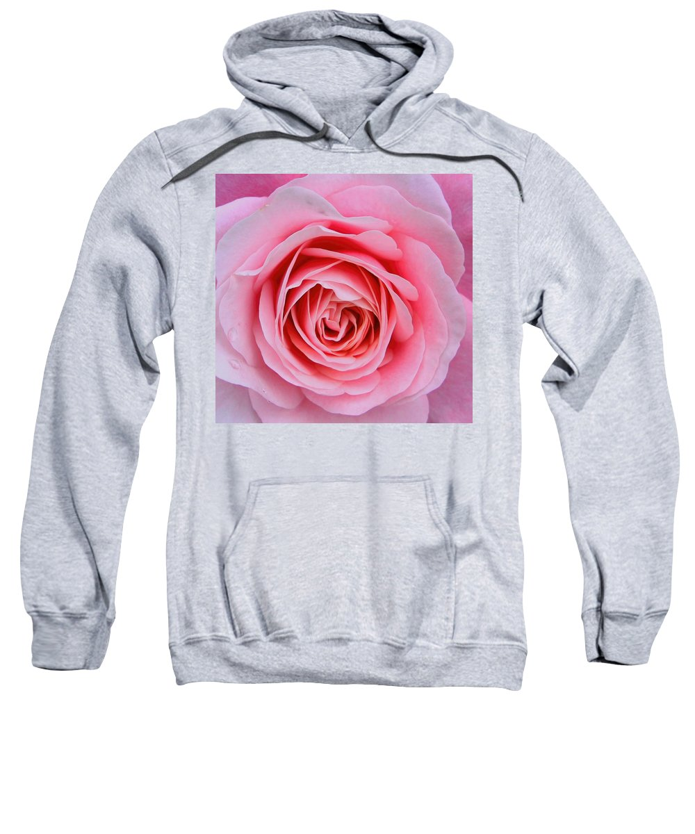 Pink Flowers Sweatshirt featuring the photograph Pink Rose by Amanda Stadther