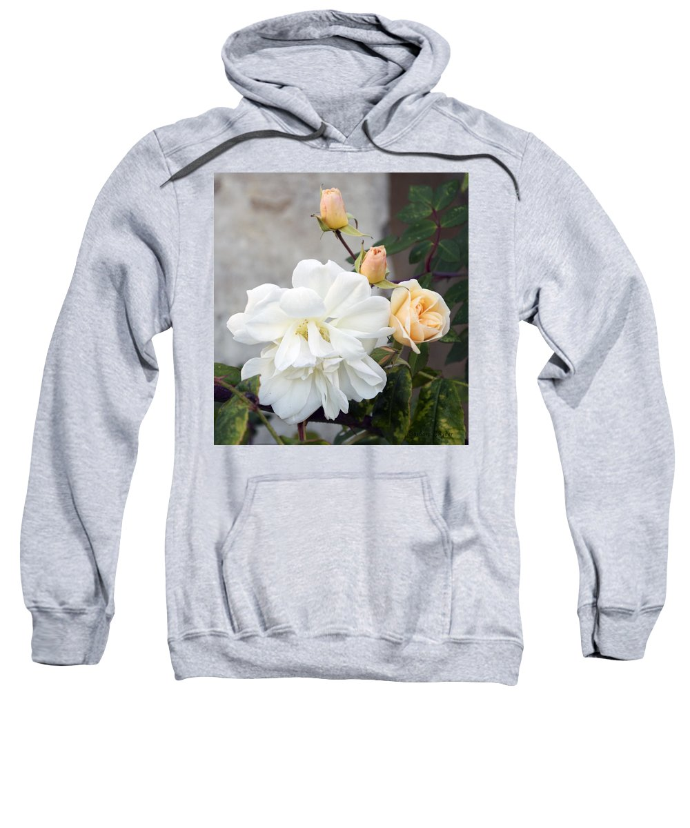 Pink Rose Buds At Carmel By The Sea Mission Sweatshirt featuring the digital art Pink Rose Buds At Carmel By The Sea Mission by Barbara Snyder