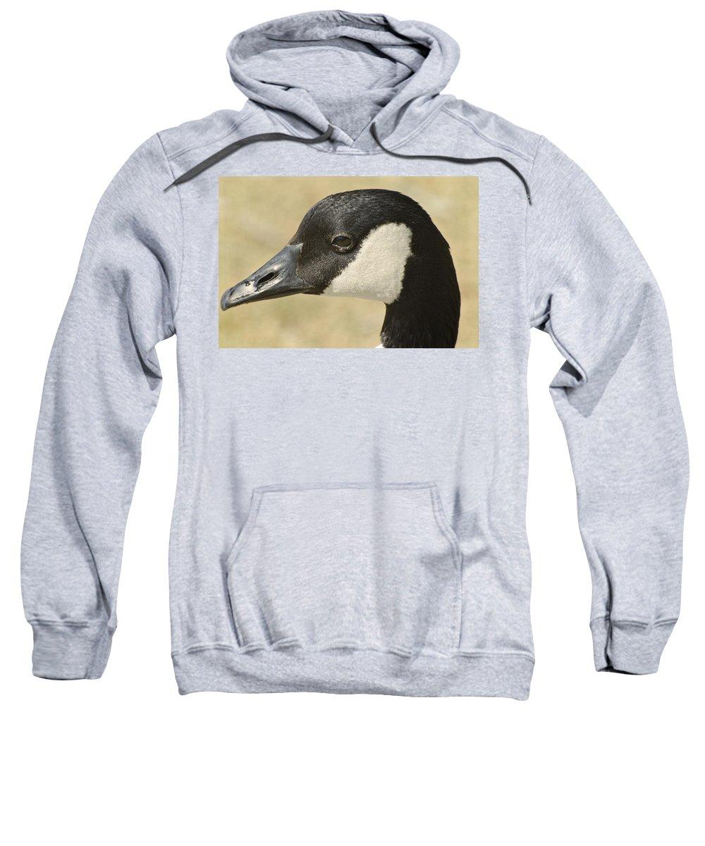 Canadian Goose Sweatshirt featuring the photograph Portrait Of A Canadian Goose by Saija Lehtonen