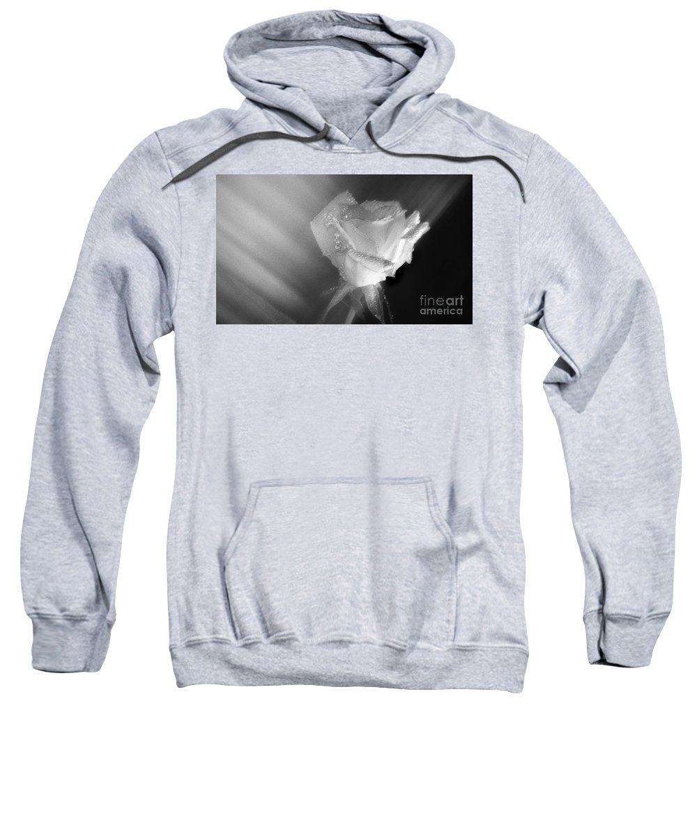 Pictures Of Flowers Sweatshirt featuring the photograph Portrait Of A Rose by Skip Willits