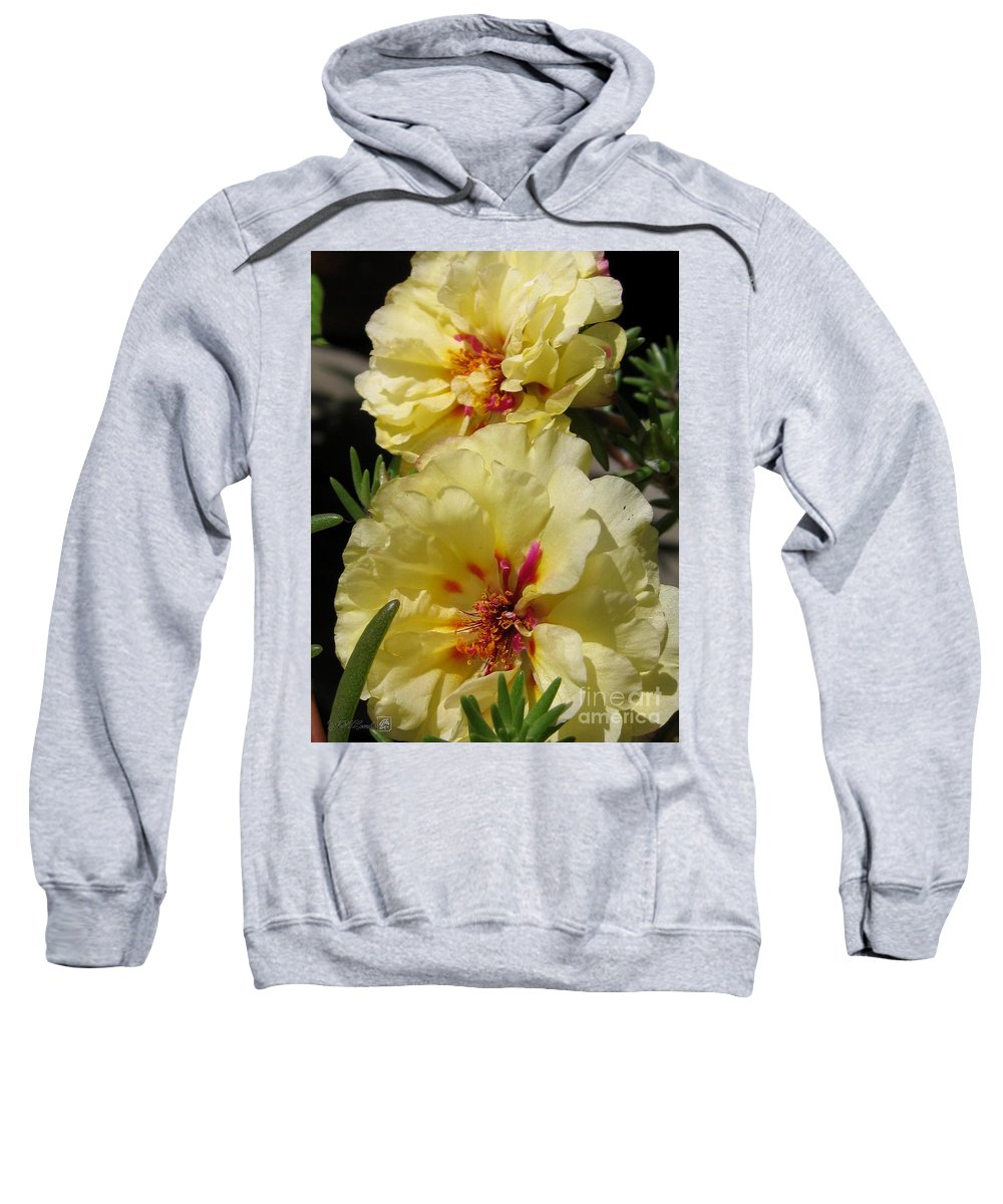 Mccombie Sweatshirt featuring the photograph Portulaca Named Happy Hour Banana by J McCombie