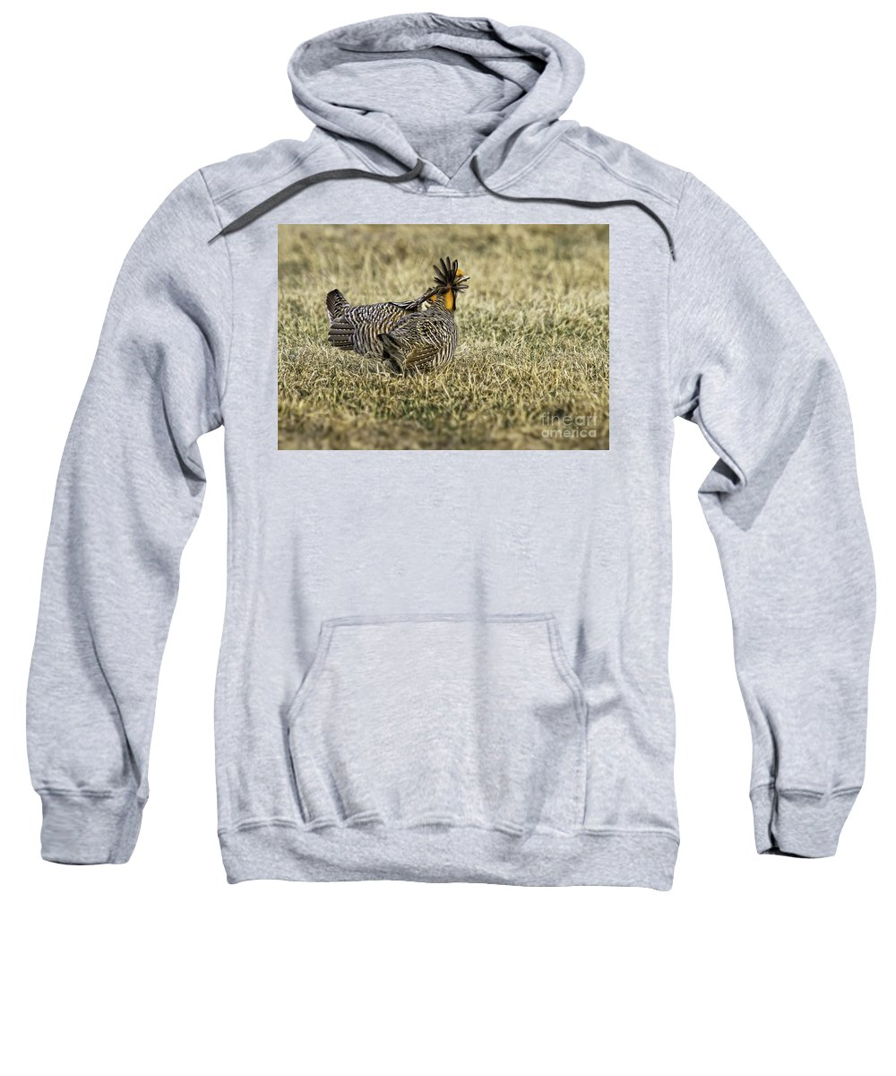 Prairie Chicken Sweatshirt featuring the photograph Looking Back by Jan Killian