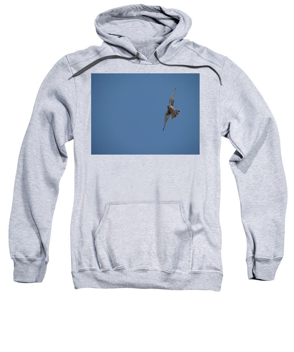 Prairie Sweatshirt featuring the photograph Prairie Diver by Darcy Tate