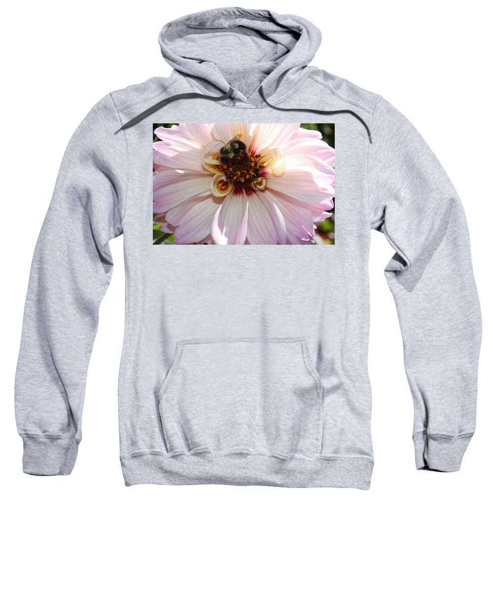 Flowers - Pretty In Pink - Dahlia- Nature - Flowers Sweatshirt featuring the photograph Pretty In Pink - Dahlia by Dora Sofia Caputo Photographic Design and Fine Art