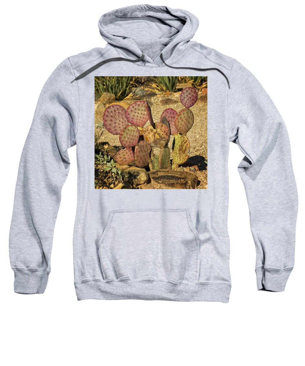 Prickly Pear Sweatshirt featuring the photograph Prickly Pear Cactus Dsc08545 by Greg Kluempers