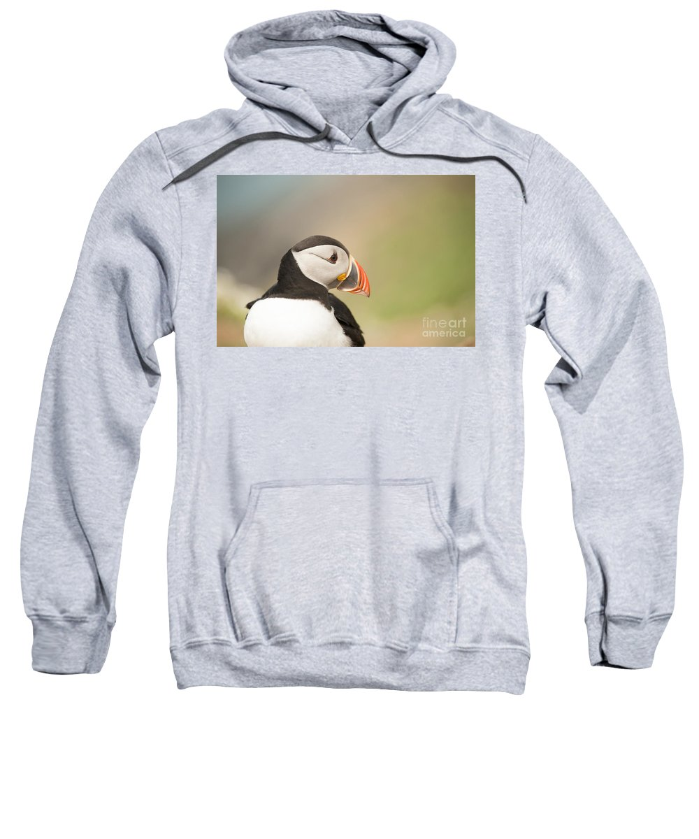 Puffin Sweatshirt featuring the photograph Puffin Profile by Anne Gilbert