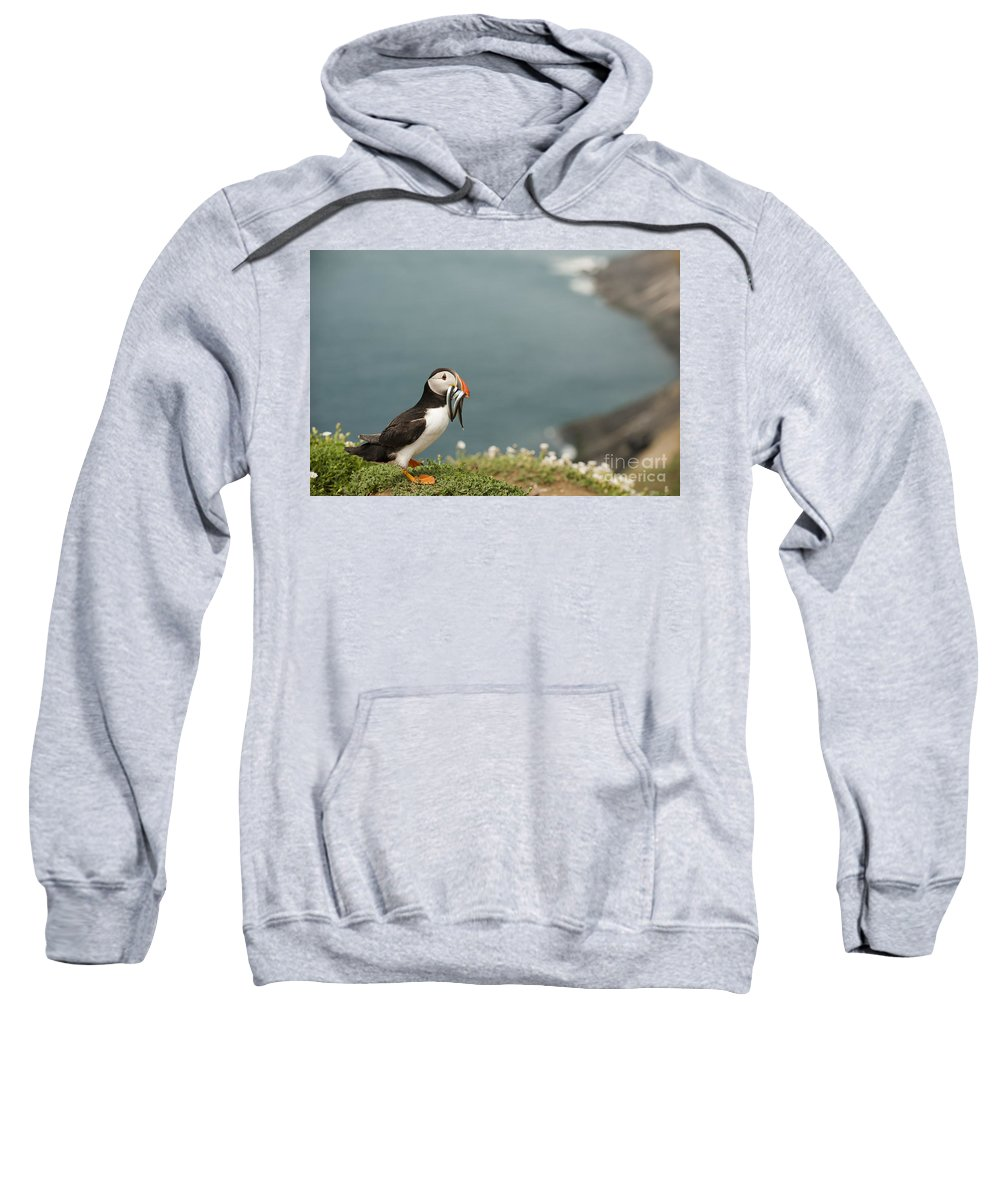 Arctica Sweatshirt featuring the photograph Puffin With Sandeels by Anne Gilbert