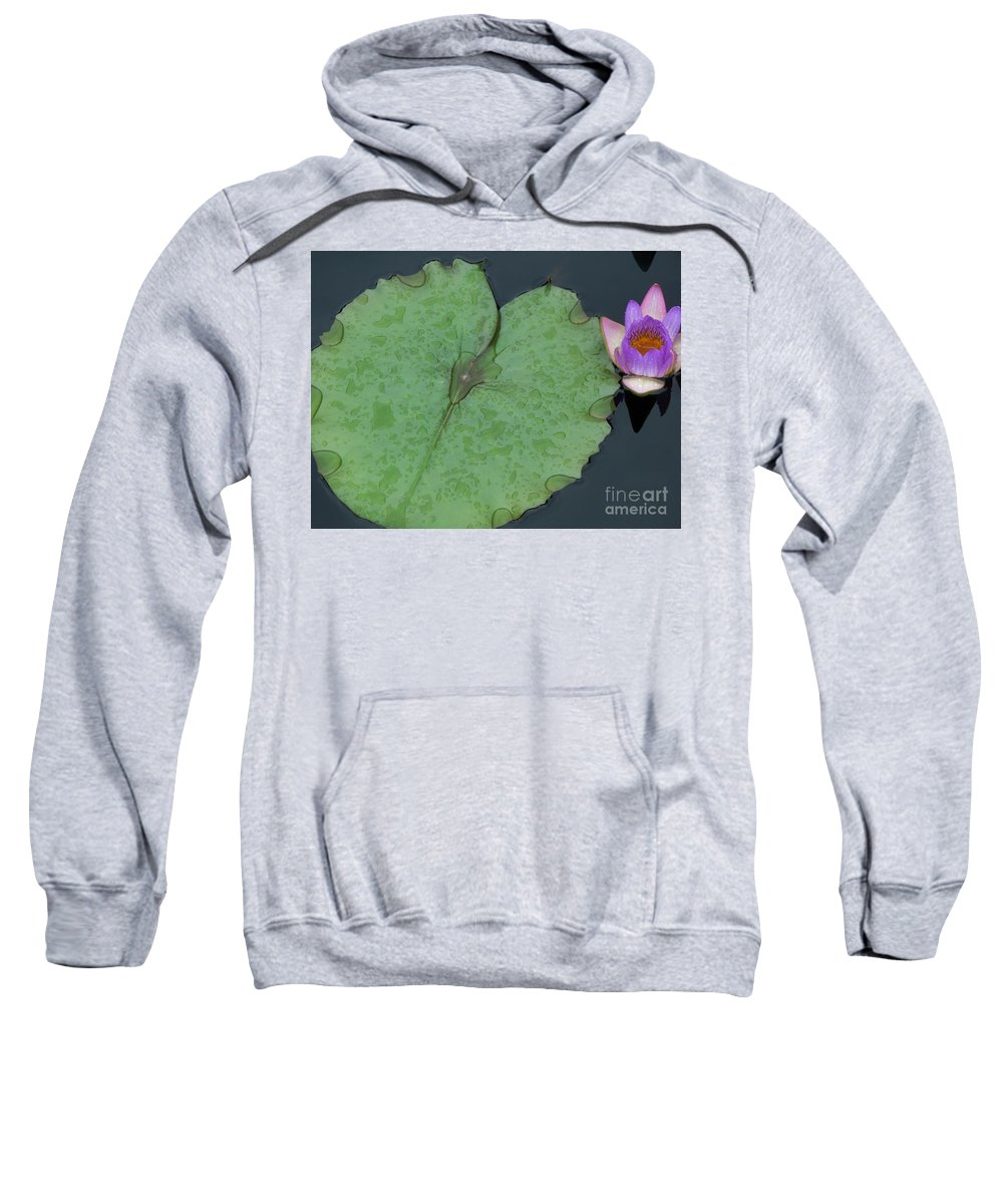 Water Lilies Sweatshirt featuring the photograph Puple Lily And Pad With Raindrops by Eric Schiabor