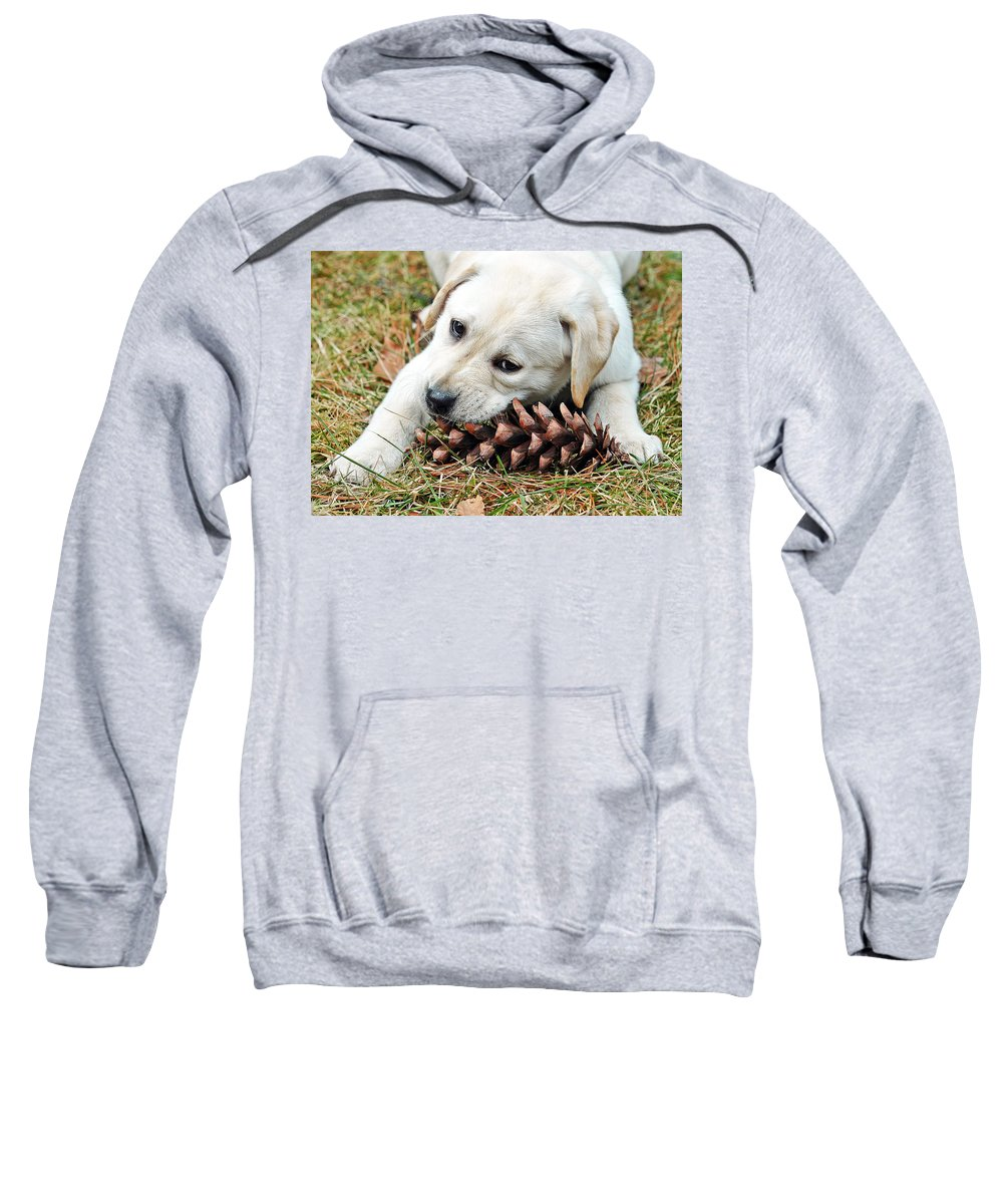 Animals Sweatshirt featuring the photograph Puppy With Pine Cone by Lisa Phillips