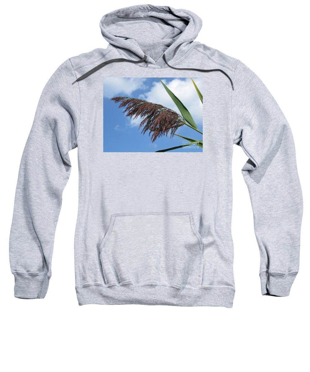 \reed Sweatshirt featuring the photograph Purple Fringe by Ann Horn