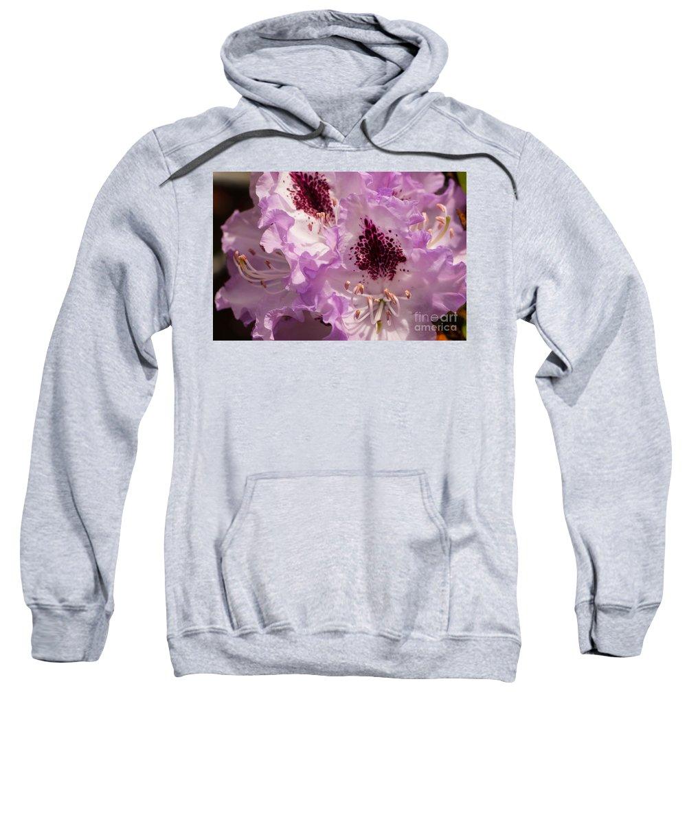 Flower Sweatshirt featuring the photograph Purple Rhodo by Brigitte Mueller