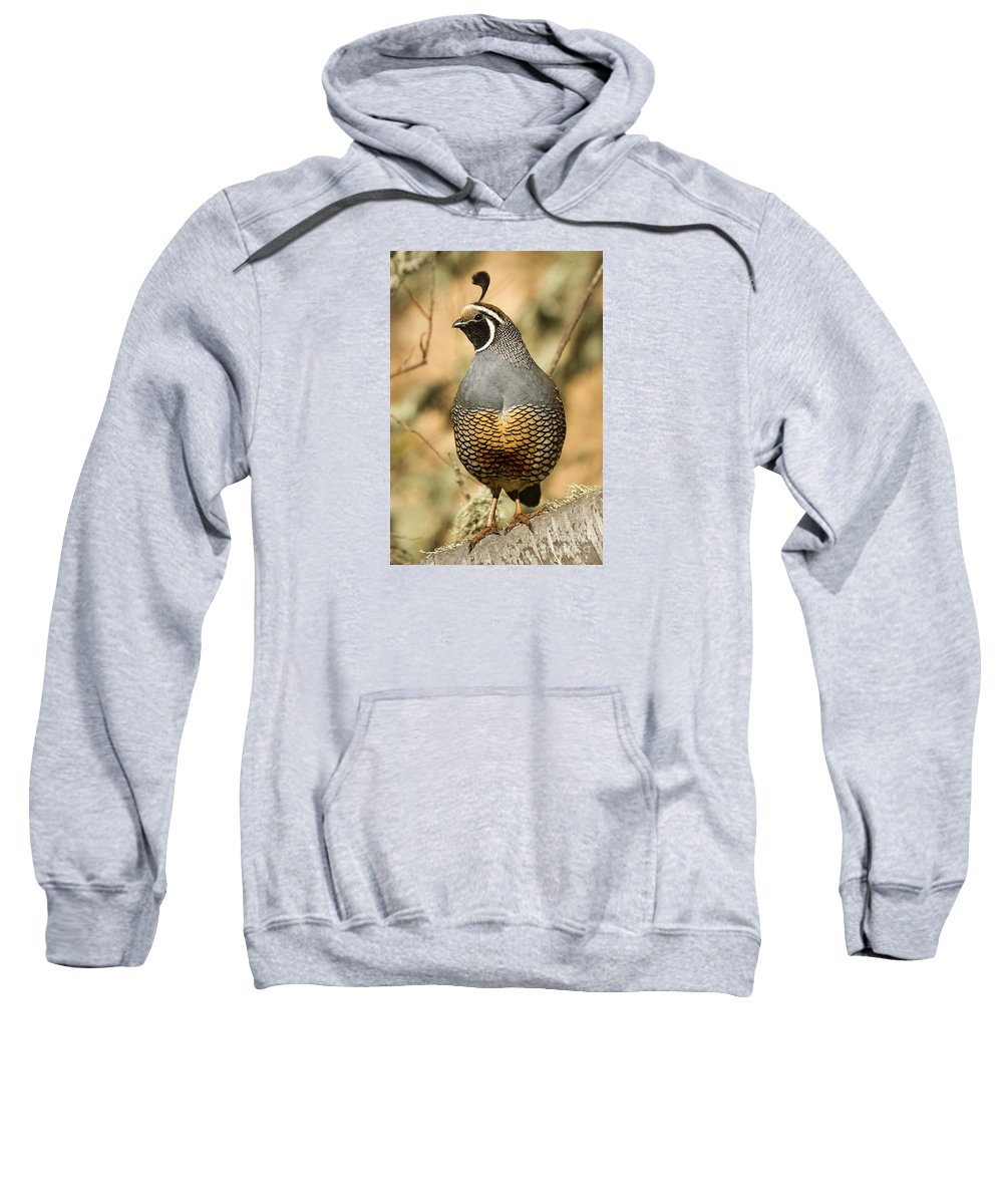 Animal Sweatshirt featuring the photograph Quail Lookout by Alice Cahill
