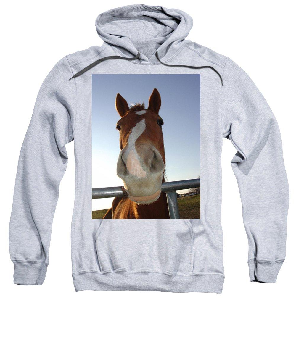Quarter Horse Portrait Sweatshirt featuring the photograph Quarter Horse Portrait Nosing Around by Lesa Fine