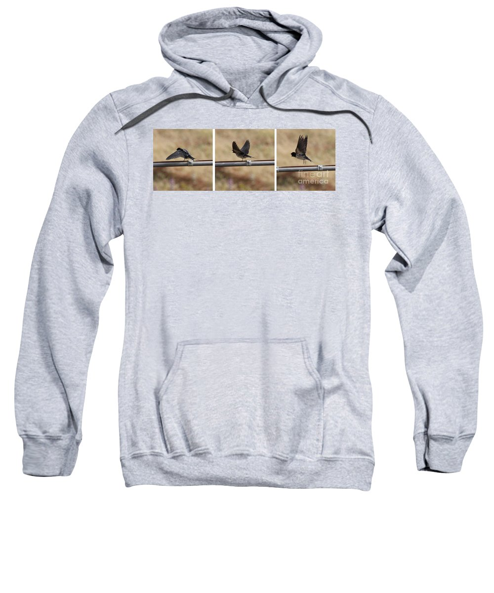 Bird Sweatshirt featuring the photograph Ready For Flight by Adrienne Franklin