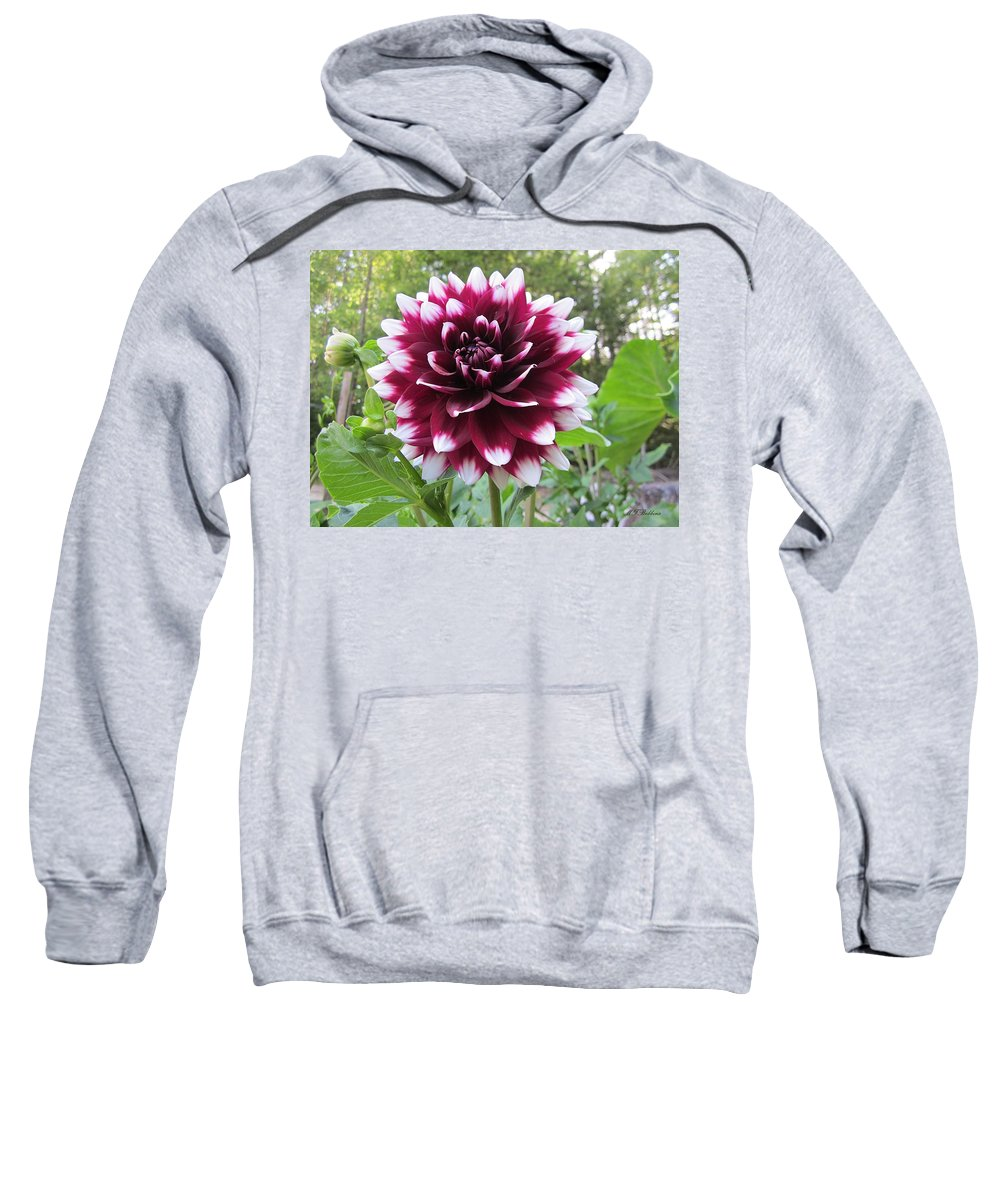 Dahlia Sweatshirt featuring the photograph Red And White Dahlia by MTBobbins Photography