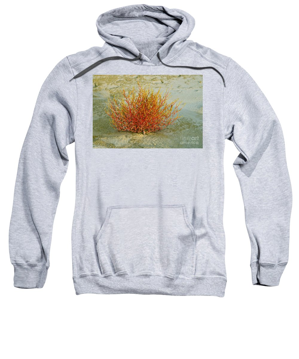 Monahans Sand Dunes State Park Texas Parks Desert Deserts Plant Plants Foliage Flower Flowers Color Dune Desertscape Desertscapes Bush Bushes Succulent Succulents Landscape Landscapes Nature Sweatshirt featuring the photograph Red And Yellow Desert Color by Bob Phillips