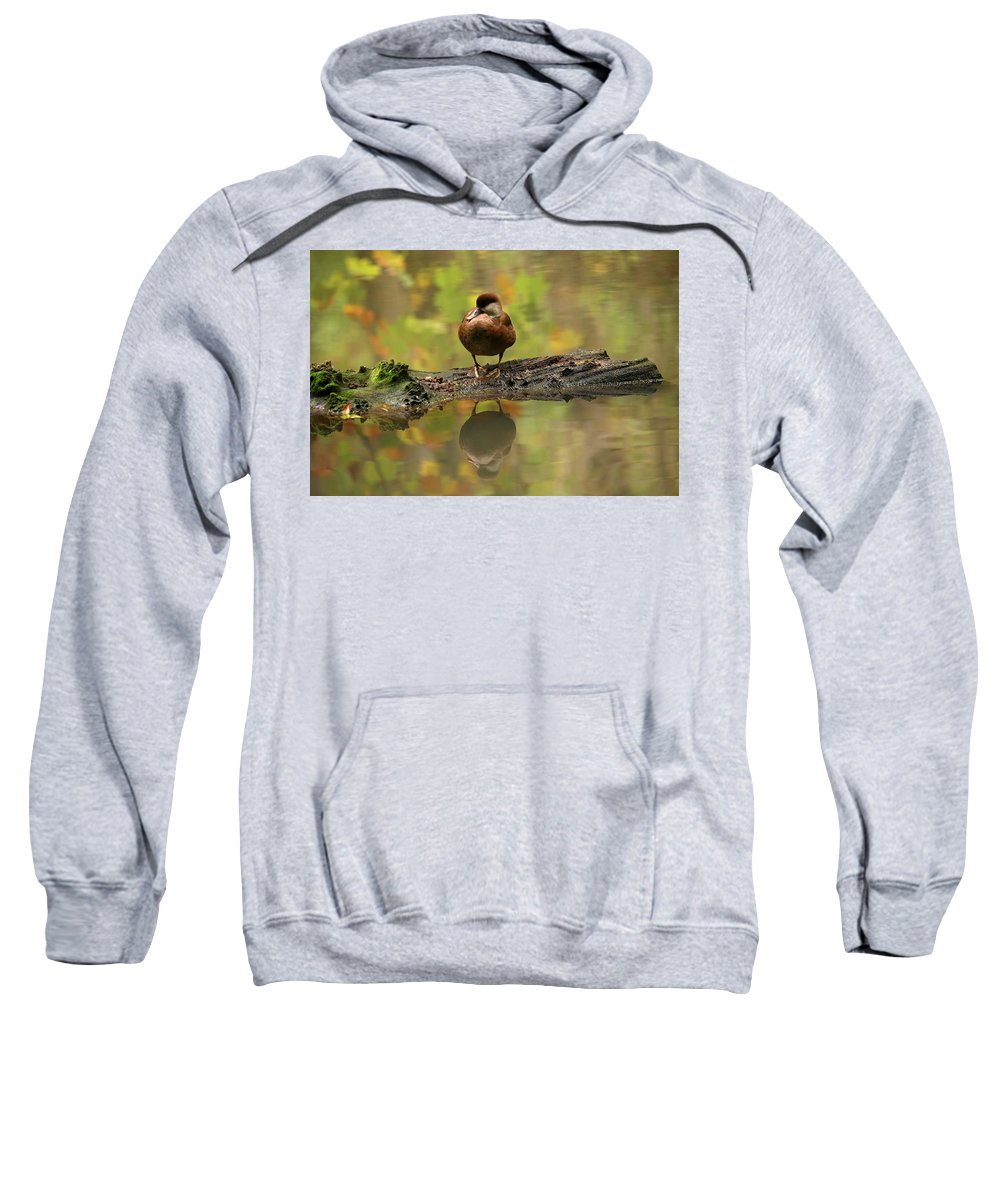 Red-crested Pochard Hooded Sweatshirts T-Shirts