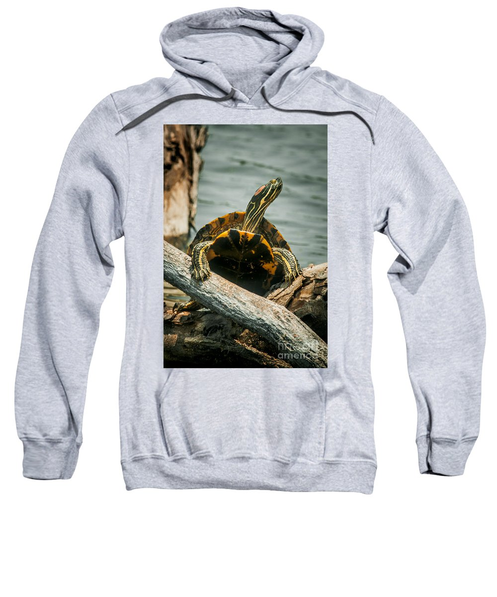 Turtle Sweatshirt featuring the photograph Red Eared Slider Turtle by Robert Frederick