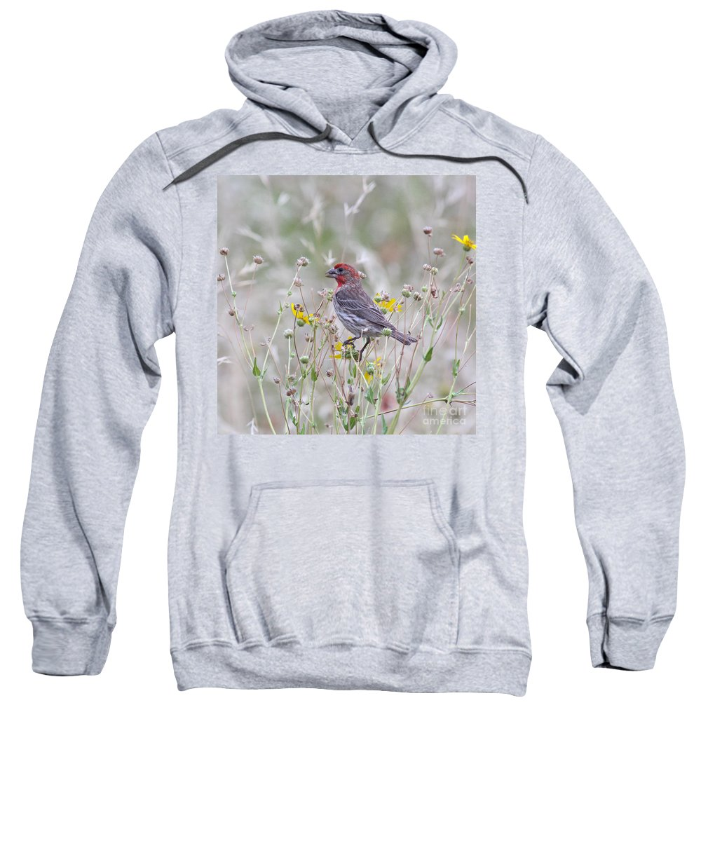 Animal Sweatshirt featuring the photograph Red House Finch In Flowers by Robert Frederick